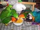 Parrots And fertile Parrots Eggs For Sale at affordable pric